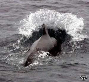 Ponorka přátelská k životnímu prostředí.
